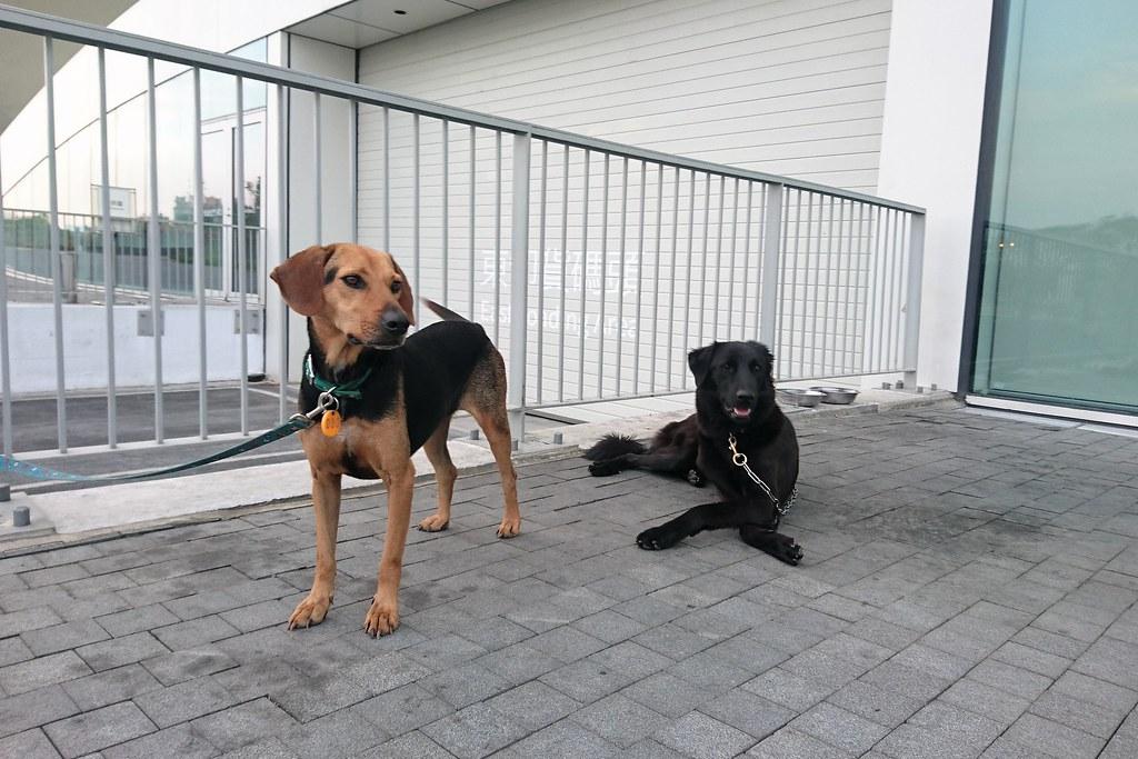 為推廣領養,高市動保處媒介收容所犬隻到學校機關等,擔任巡邏犬或動保教育大使。攝影:李育琴
