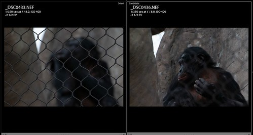 Screen Capture of the Fencing and RAW file for Bonobo Monkey