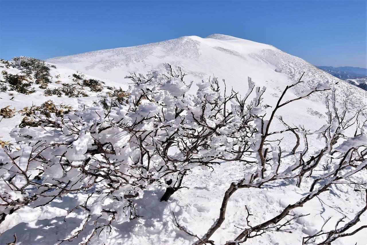 平標山・霧氷