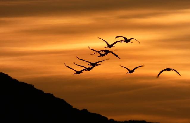 Grullas al amanecer en la Laguna de Gallocanta