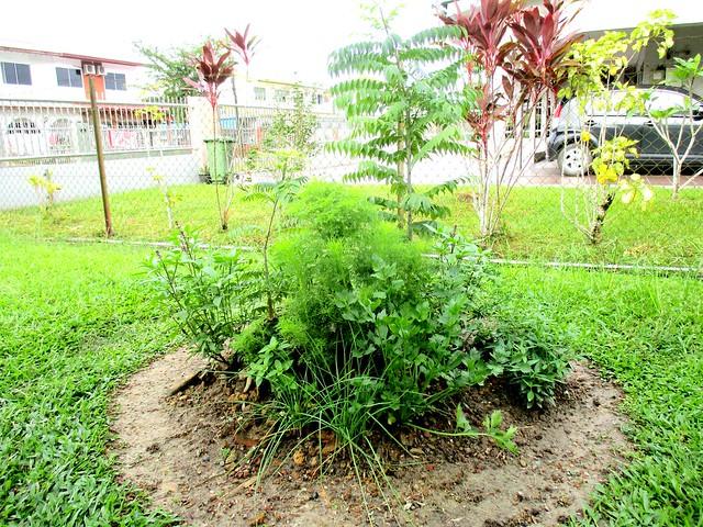 My herbs circle