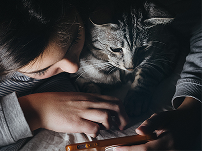Consult a vet from home via the Internet. Photo by Velizar Ivanov on Unsplash.