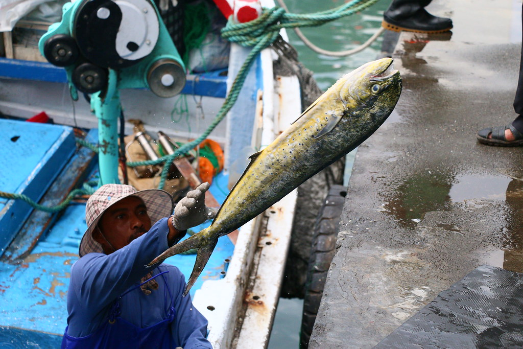 下午的成功魚市場