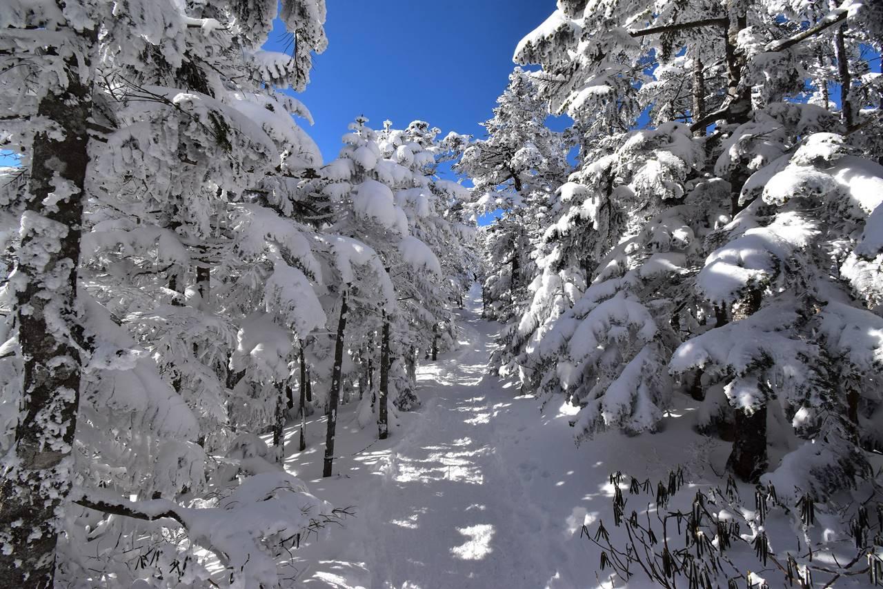 北横岳登山 冬の森の一本道