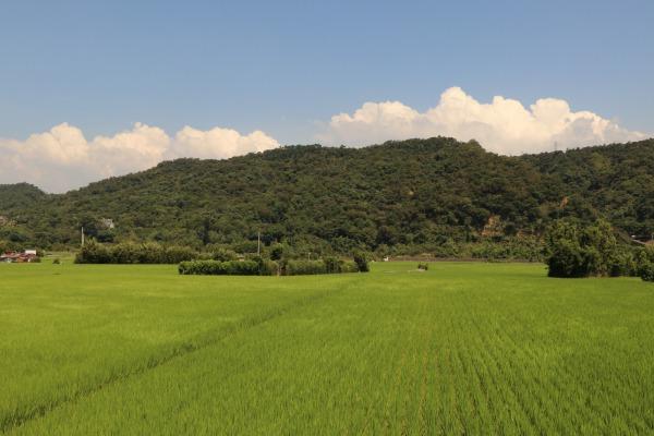 農地。攝影:湯琳翔