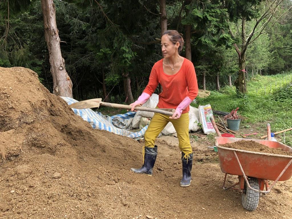 工作人員將表層土與有機質混成適合雲杉的生長環境。攝影:廖靜蕙