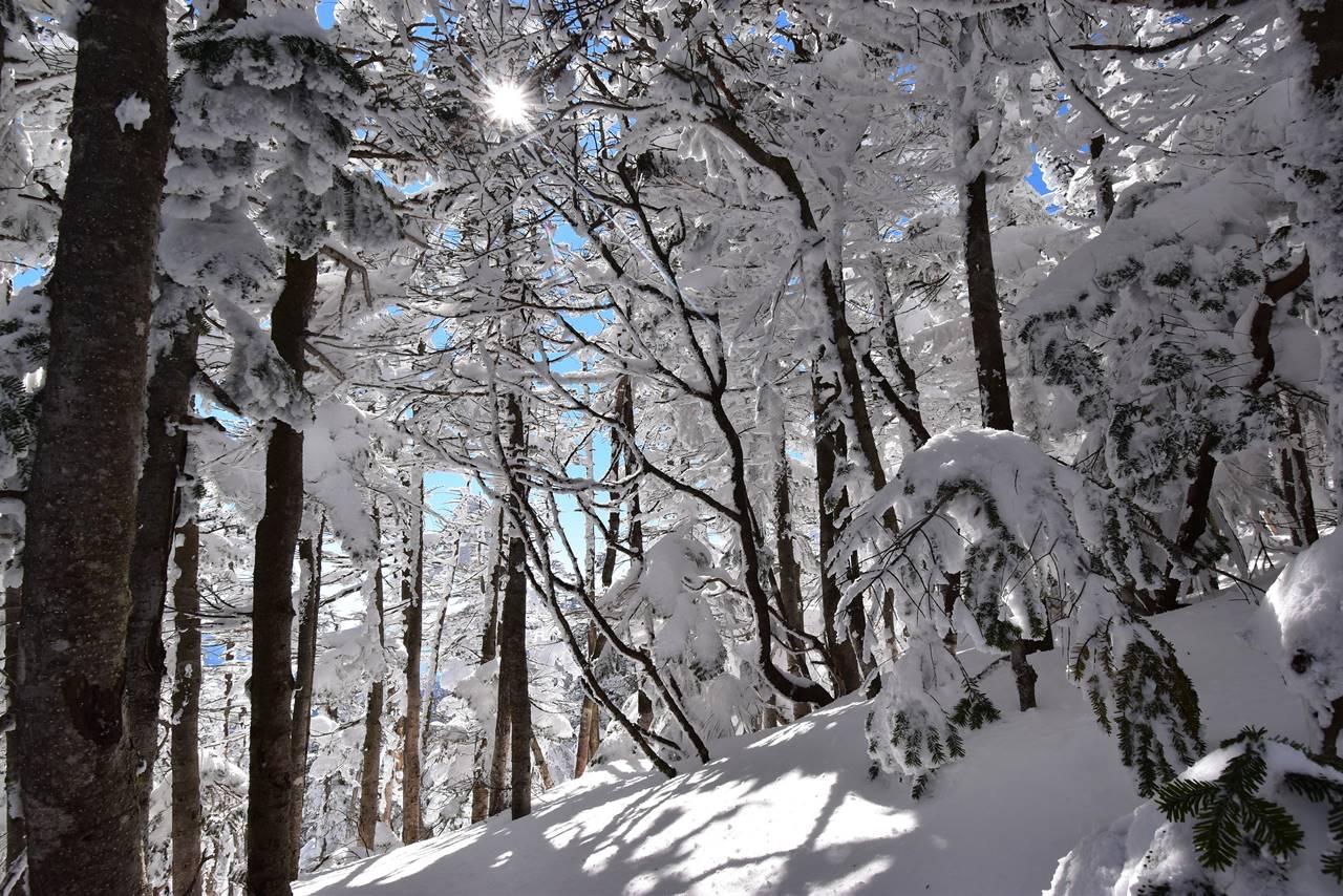 北横岳の雪の森