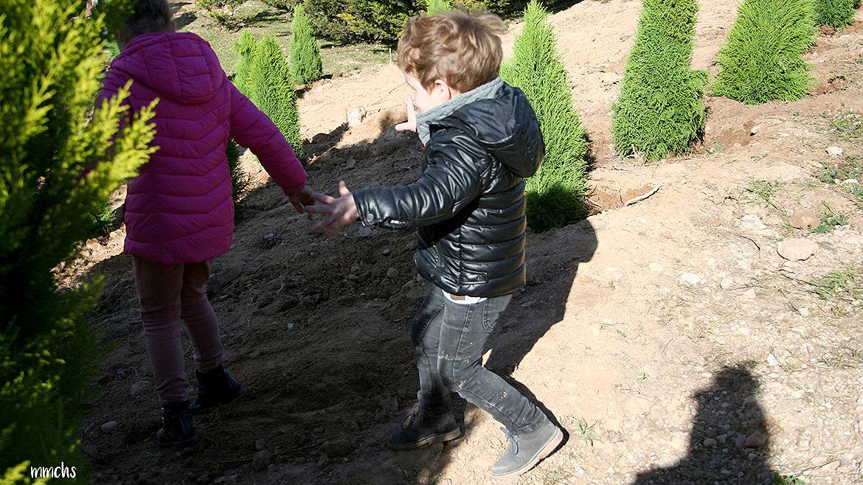 plantar un árbol con niños