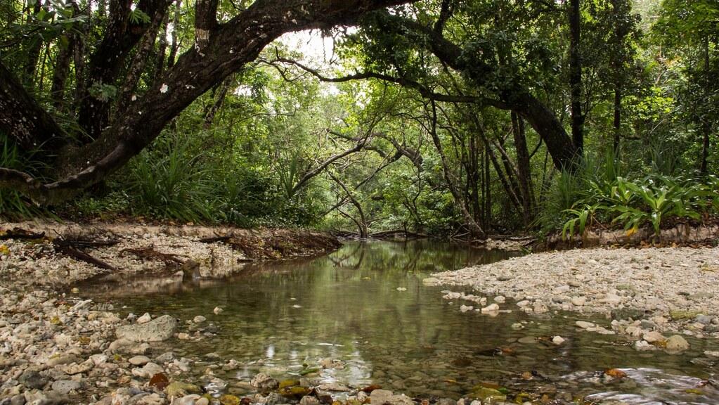 印尼烏戎庫隆國家公園(Ujung Kulon National Park)。圖片來源:維基百科/Achmad Soerio Hutomo(CC BY 2.0)