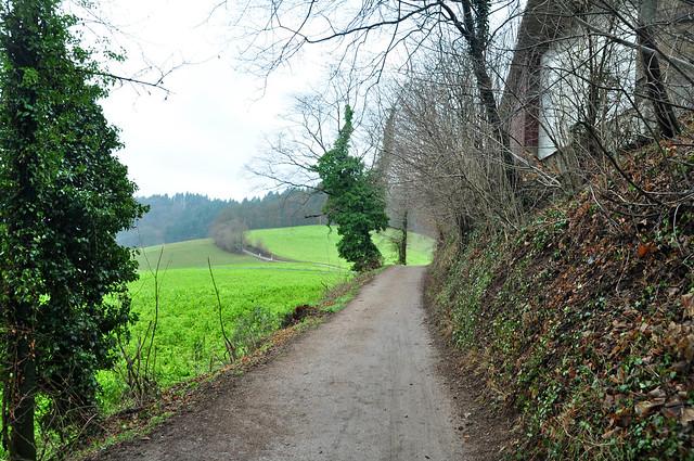 Dezember 2018 ... Gründüngung bei Ursenbach im Odenwald ... Foto: Brigitte Stolle