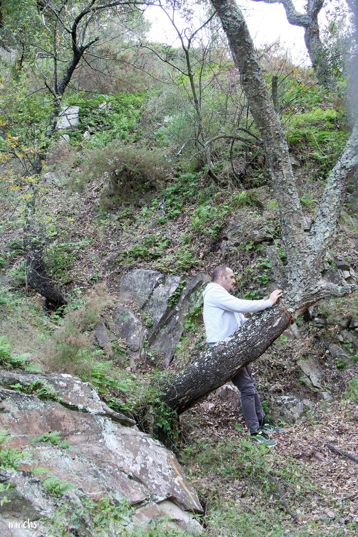bosques de alcornoques en Aín