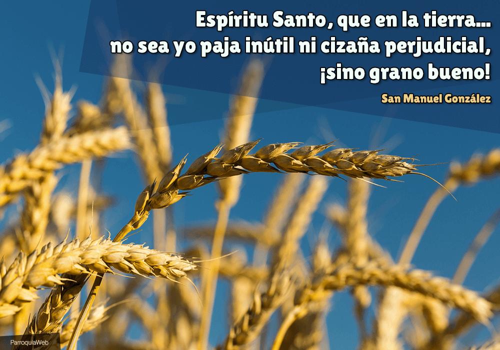 Espíritu Santo, que en la tierra... no sea yo paja inútil ni cizaña perjudicial, ¡sino grano bueno! - San Manuel González
