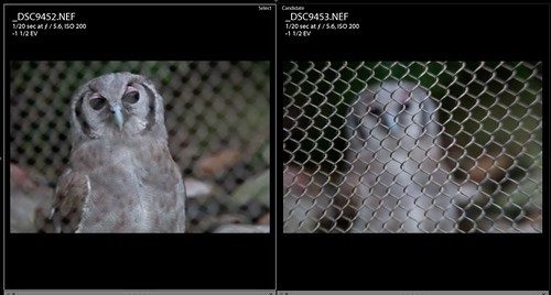 Screen Capture of owl shots