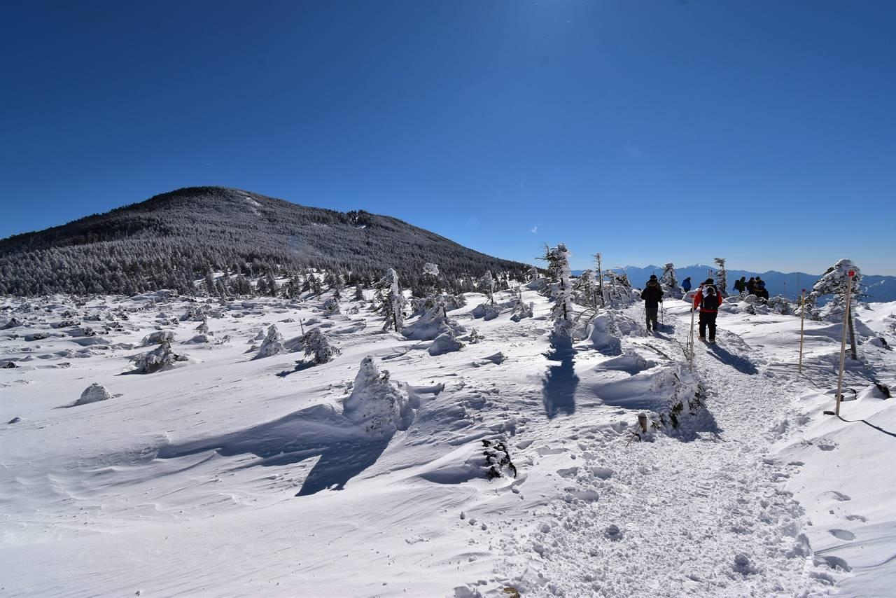 坪庭の雪原と縞枯山