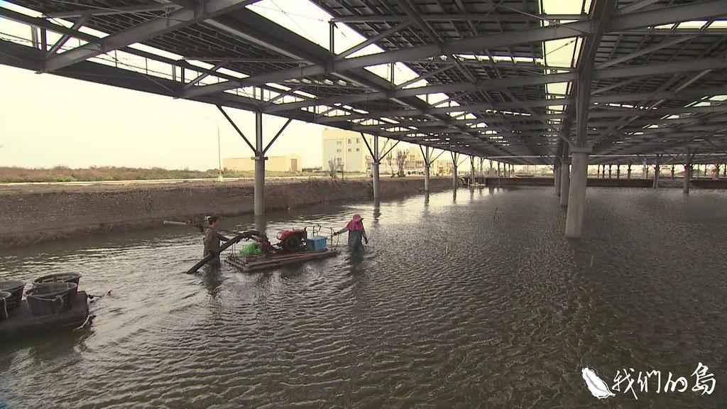 水產試驗所的海水繁養殖中心裡的一處魚塭上方,已經架起光電板,開始進行漁電共生試驗。
