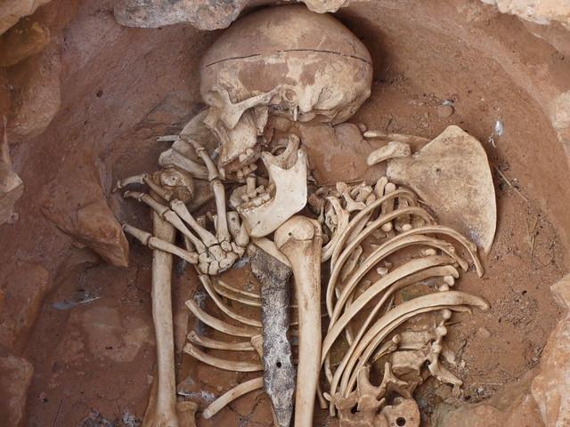 Réplica exacta del esqueleto encontrado en la Motilla del Azuer (Campo de Calatrava, Ciudad Real)