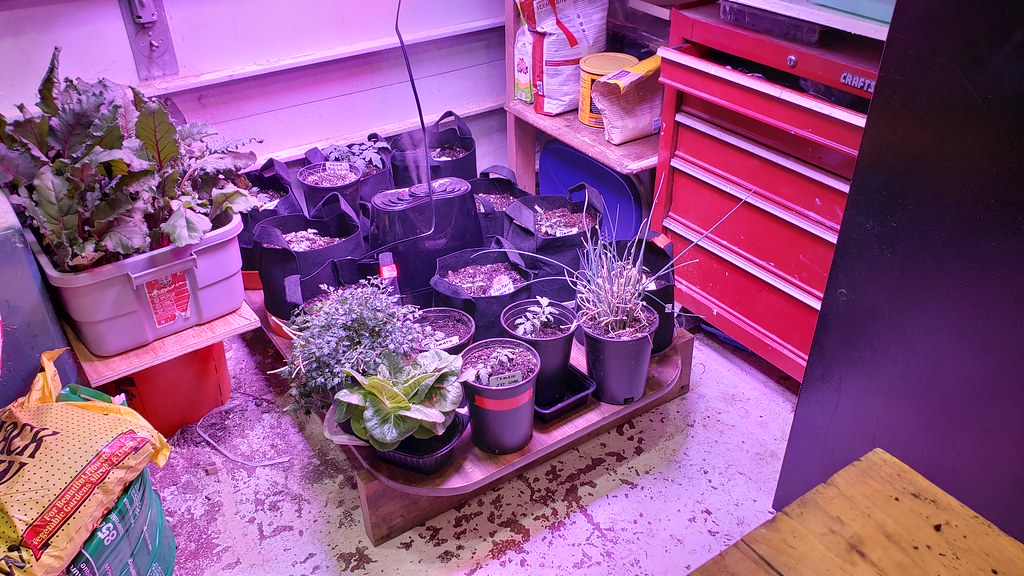 Indoor Garden 2018-2019 Revisited 31796976997_fbb7a955c3_b