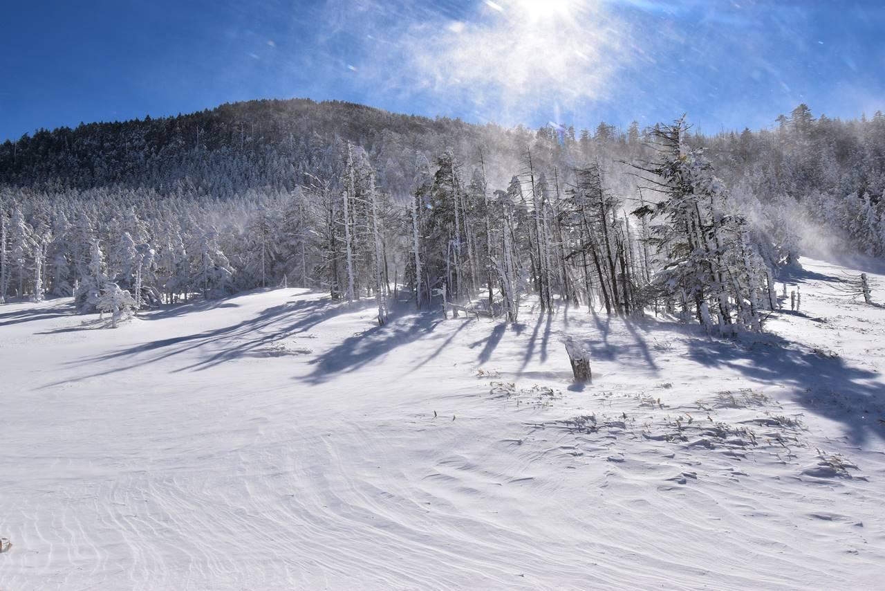 縞枯山の樹氷