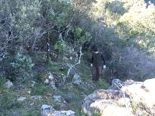 Dans la remontée du sentier de Pisciaronu