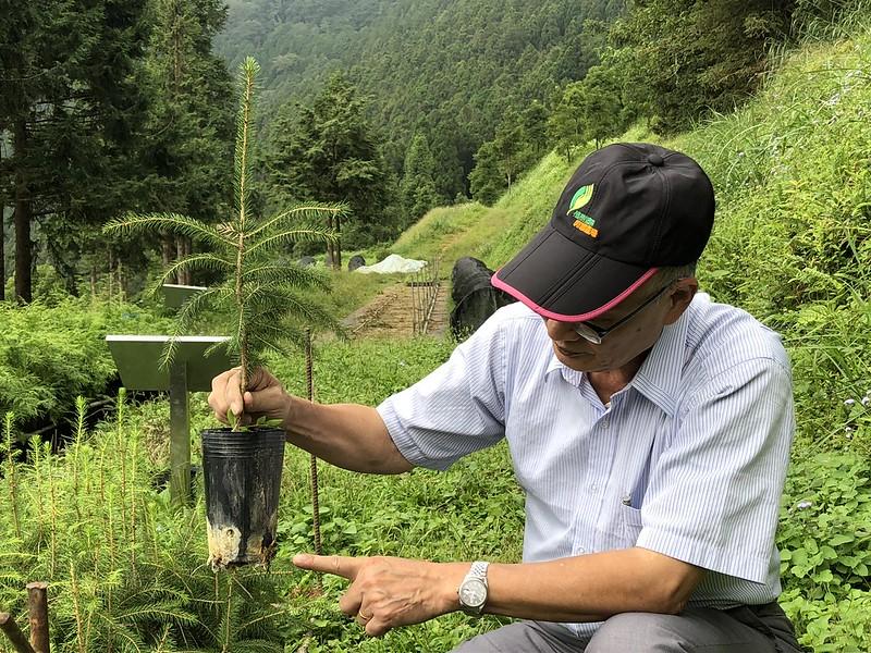 李炎壽指出,讓雲杉育苗成功的關鍵,是帶回專屬的菌根菌叢。廖靜蕙攝。