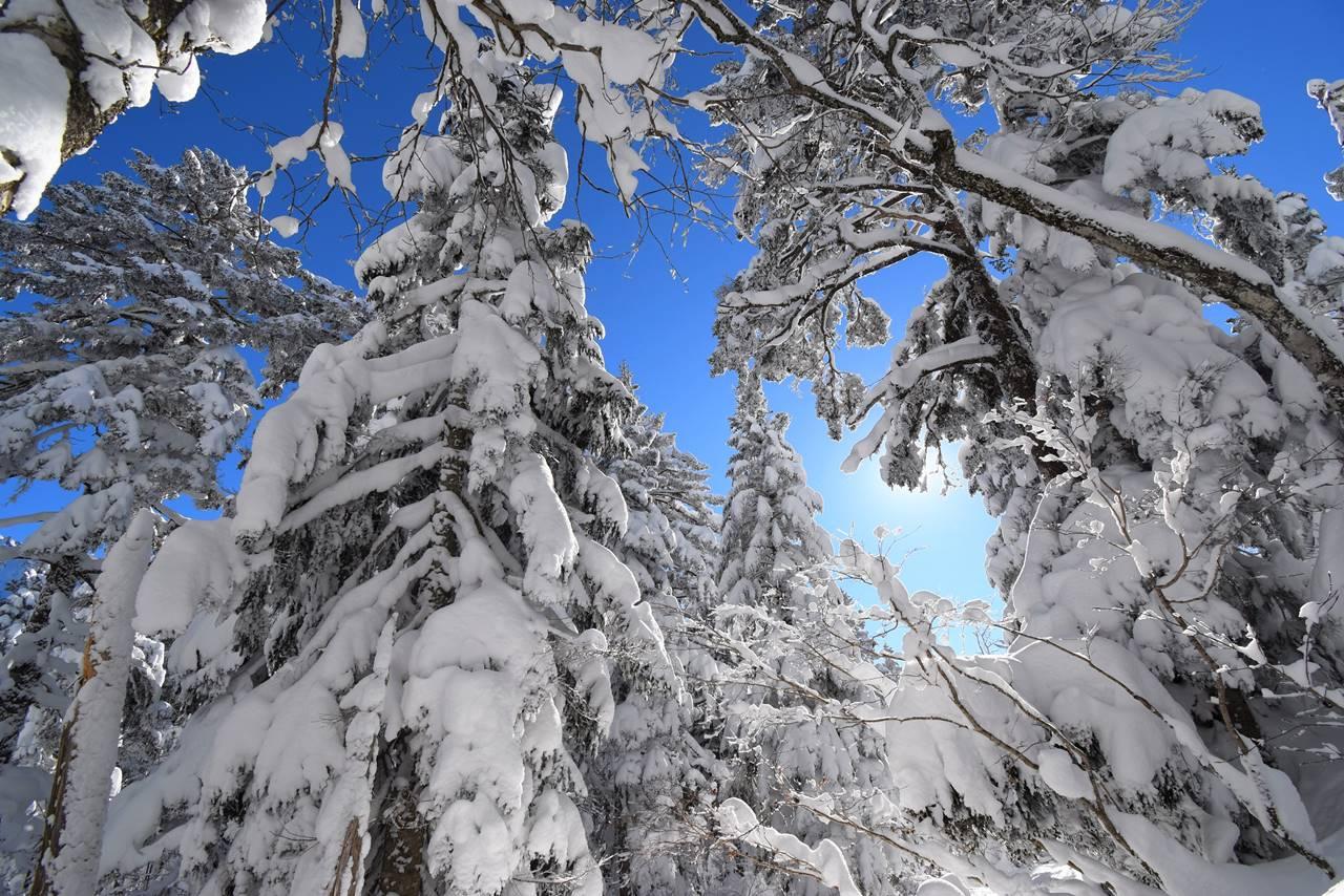 西穂高岳のクリスマスツリー