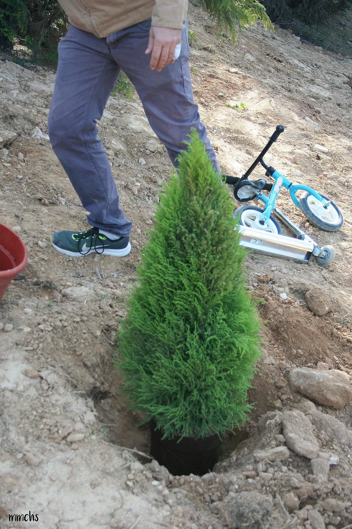 plantando un árbol con niños Paterna