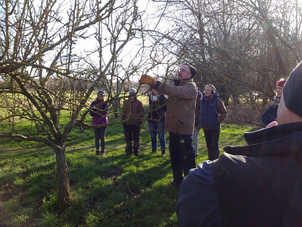Pruning an apple tree in an orchard