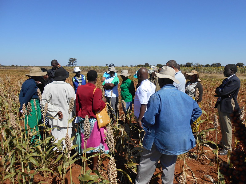 2018 Zimbabwe_Climate Resilience_Pictures from the trip Farmers Field Day
