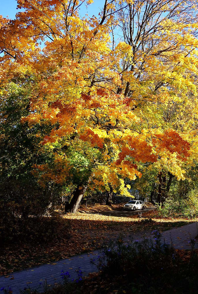 Октябрь в Светлогорске – это вторая весна, когда листья, как ковёр из цветов
