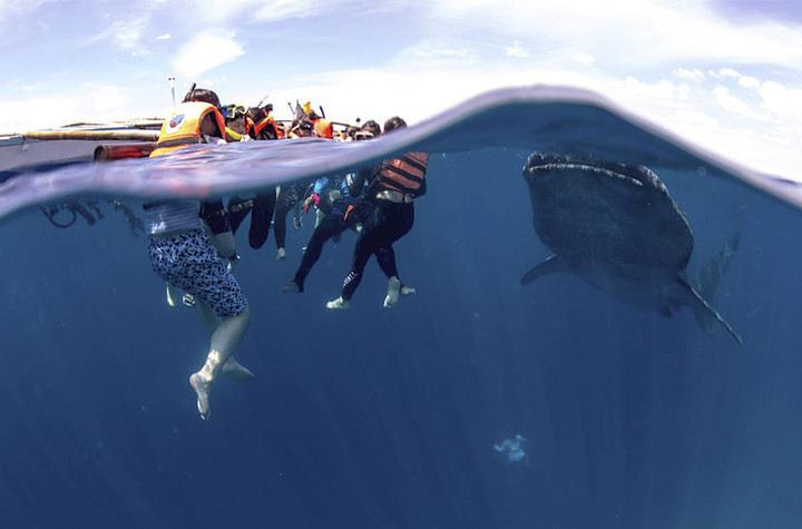 菲律賓「Oslob」村的鯨鯊生態旅遊。圖片來源:Andre Snoopy Montenegro/Southern Cross