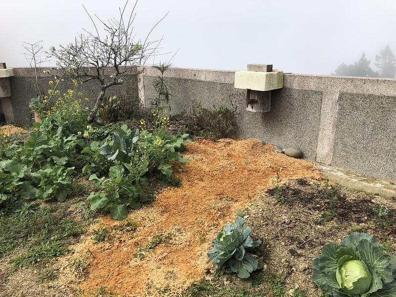 圍牆邊的木頭,以及周邊的好生態,提供無螫蜂生存環境