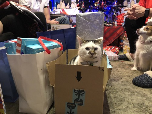 Larry sat in a box