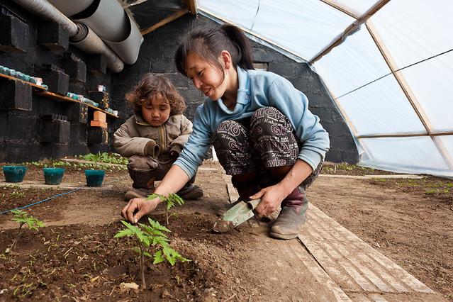 Passive Solar Greenhouses in Mongolia