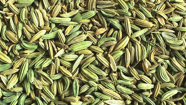 The benefits of Fennel Tea/seeds