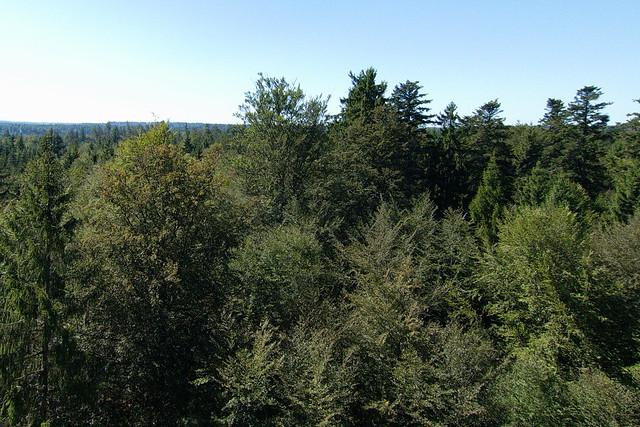 Baumwipfelpfad Sicht unten