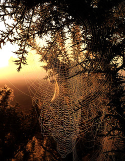 Dew laden spiders webs on gorse, Thursley Common | by #Dave Roberts#