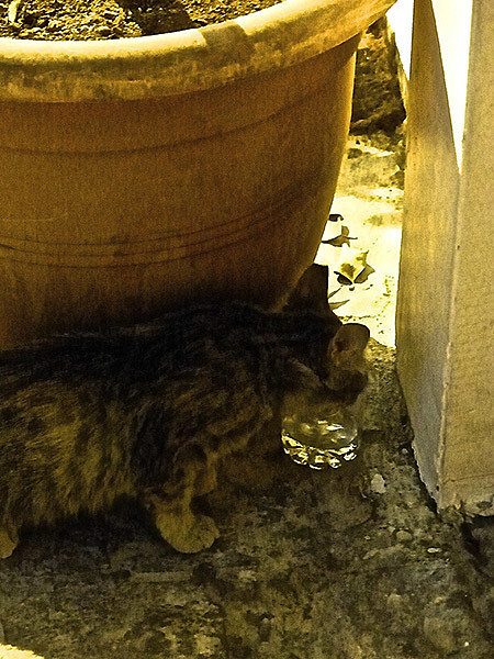 le chat et son verre d'eau
