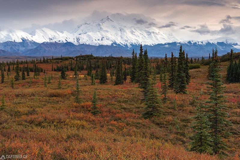Evening at Wonderlake Campground - Denali National Park