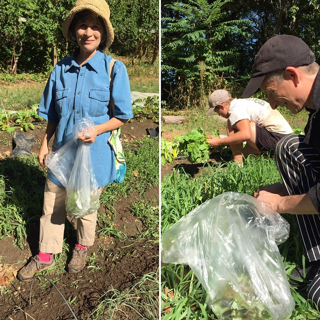 Wild foodie leads gourmet chef on foraging outing