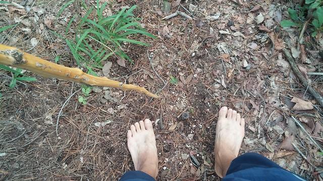 아침산책길 : 명아주 지팡이