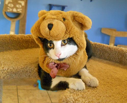cat wearing teddy bear costume