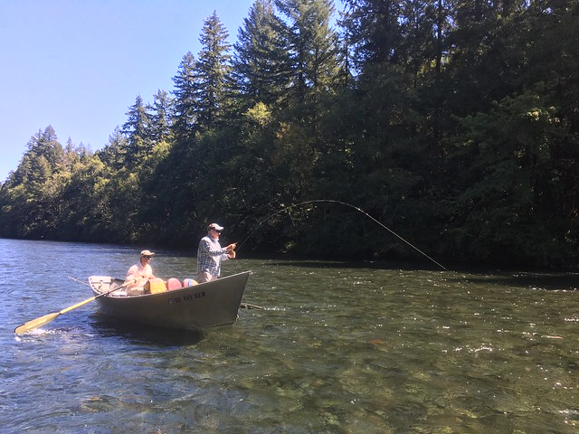 Mckenzie river fishing report end of august 2016 the for Mckenzie river fishing
