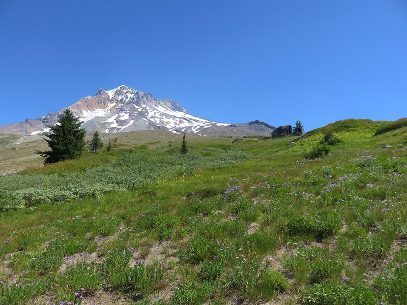 Mt. Hood and split rock from the Paradise Park Loop Trail
