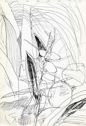 Pencil Sketch of a Coconut Palm
