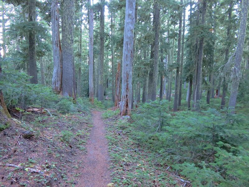 Paradise Park Trail