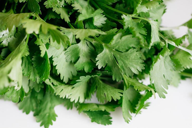 cilantro (coriander)