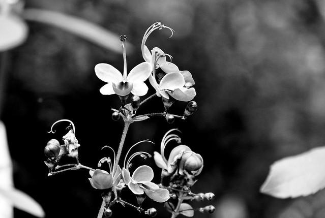 Botanischer Garten_2016-17