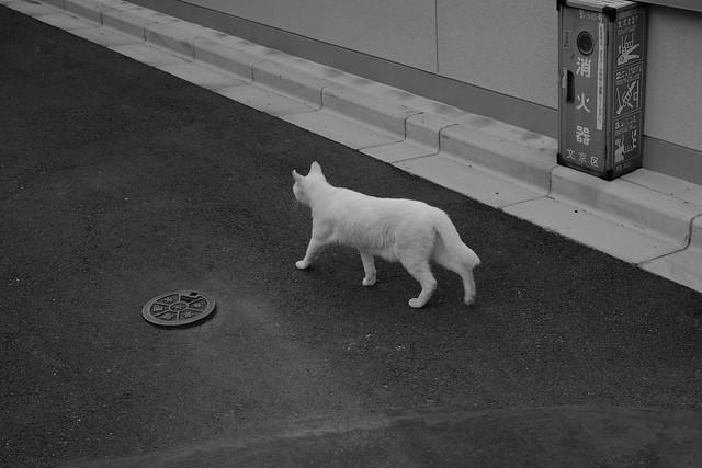 FUJI2132.jpg