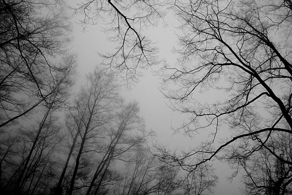 觀霧楓葉樹林