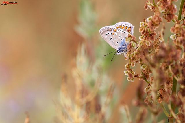 Schmetterling 20.jpg